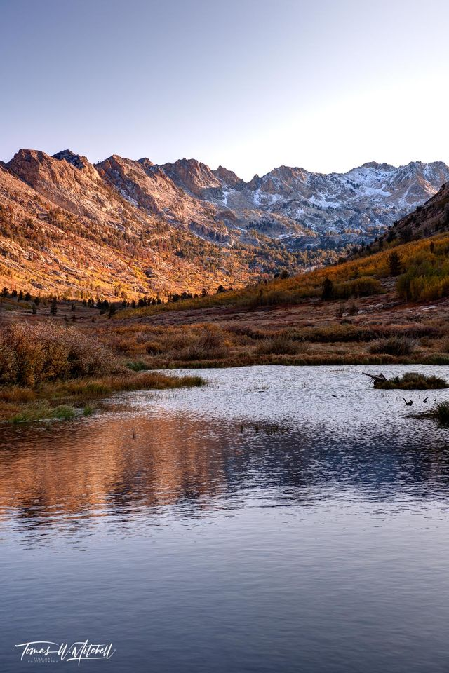 limited edition, fine art, prints, autumn, lamoille canyon, nevada, sunlight, photographing, reflection, water, texture, quaking aspen, groves, yellow, fall, mountains