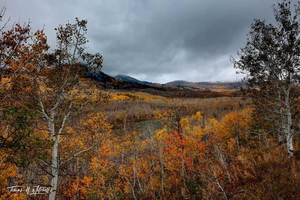 limited edition, fine art, prints, photographing, autumn, wasatch mountain state park, utah, gloom, fall colors, storm clouds, mountains, orange, yellow, quaking aspens, forests, gloom