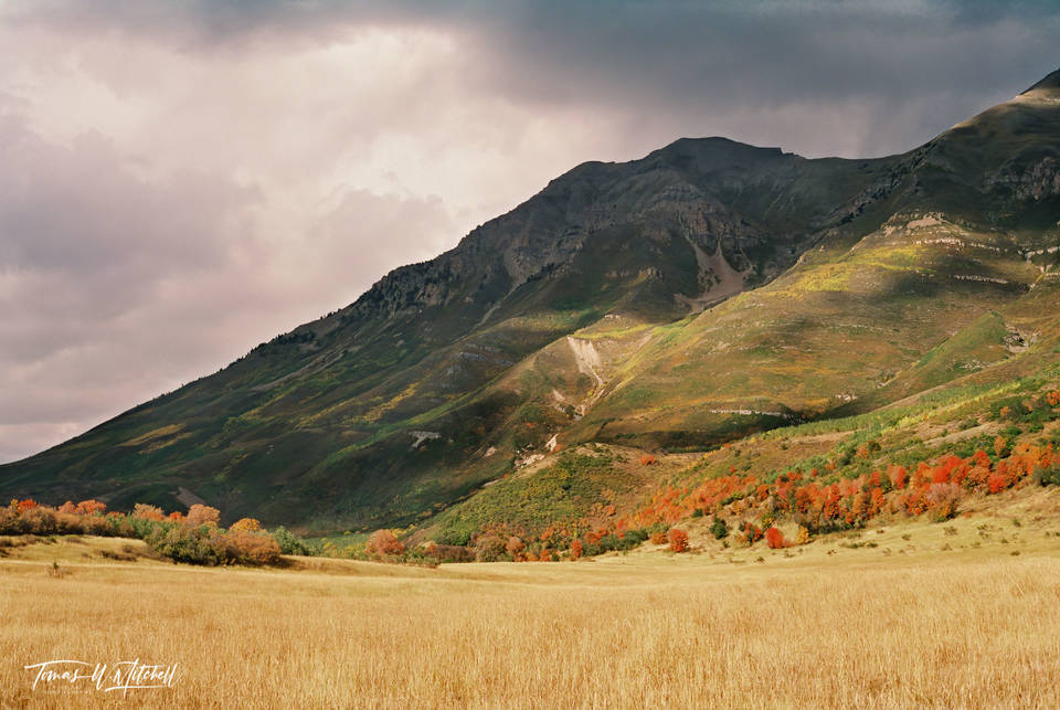 limited edition, fine art, prints, photograph, film, mount timpanogos, utah, mountain, tampanooke, american fork, canyon, autumn, meadow, nikon, cloudy, sky, shadows, colors, red, yellow, trees,