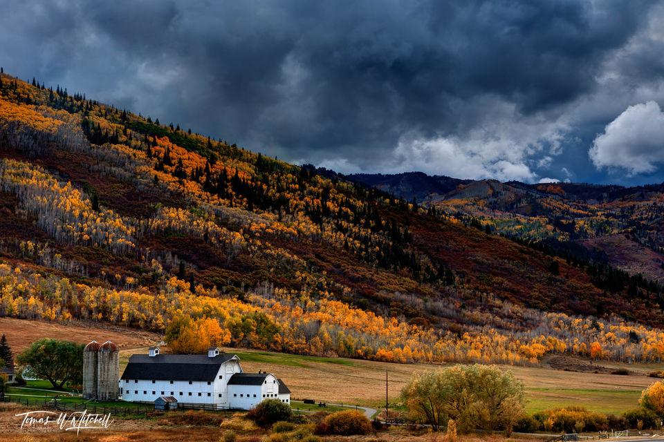 limited edition, autumn, storm, mcpolin farm, fall colors, aspen trees, yellow, orange, mountains, photograph, park city, utah, barn