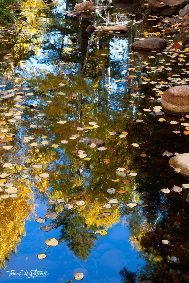 limited edition, fine art, prints, oakley, utah, abstract, stream, autumn, quaking aspens, leaves, water, blue sky, forest, reflecting, photograph