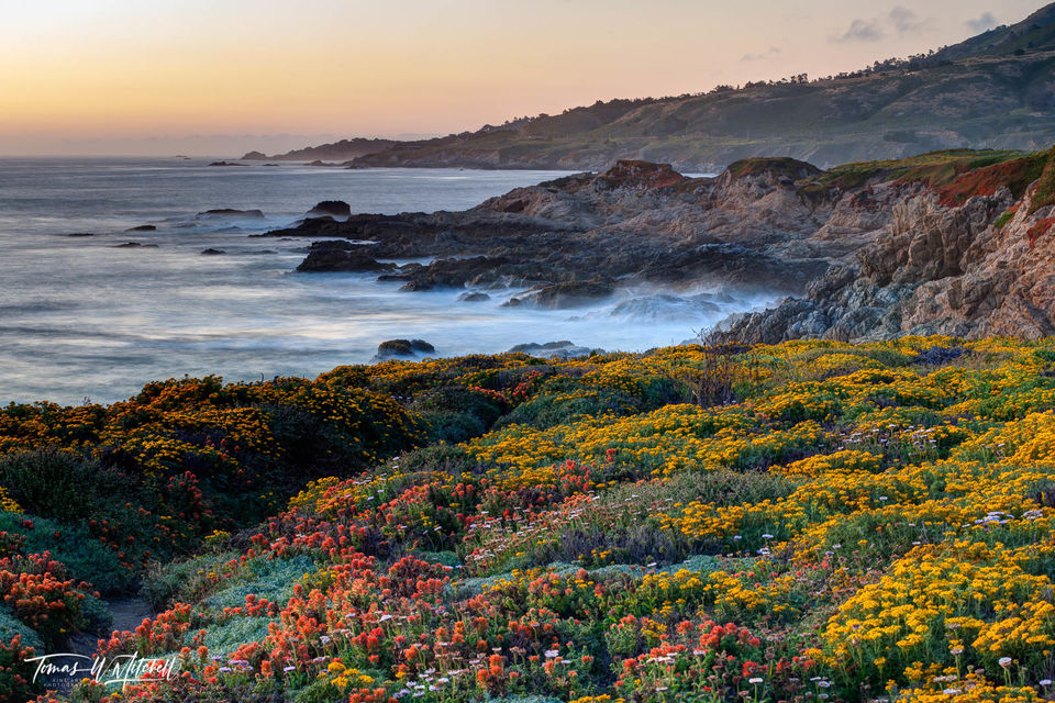 limited edition, fine art, prints, photograph, soberanes point, garrapata state park, big sur, california, wildflowers, waves, rocks, sunset, coastline