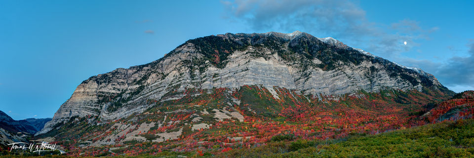 limited edition, fine art, prints, cascade mountain, utah, autumn, colors, moon, clouds, maple tree, red, pink, orange, photograph, forest, provo canyon
