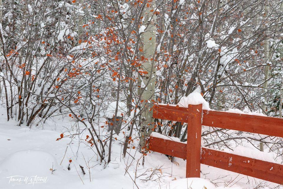 Cherry Snow Cone