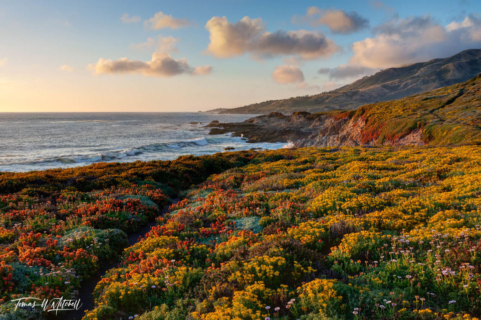 limited edition, fine art, prints, photograph, big sur, california, soberanes point, garrapata state park, waves, shoreline, wildflowers, clouds, mountains, ocean