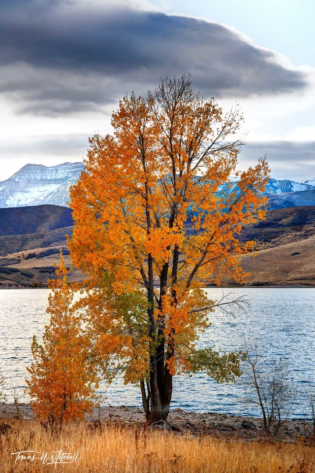 limited edition, fine art, prints, deer creek reservoir, utah, cottonwood trees, fall, colors, photograph, clouds, yellow, grass, golden, water, hills, mount timpanogos, snow