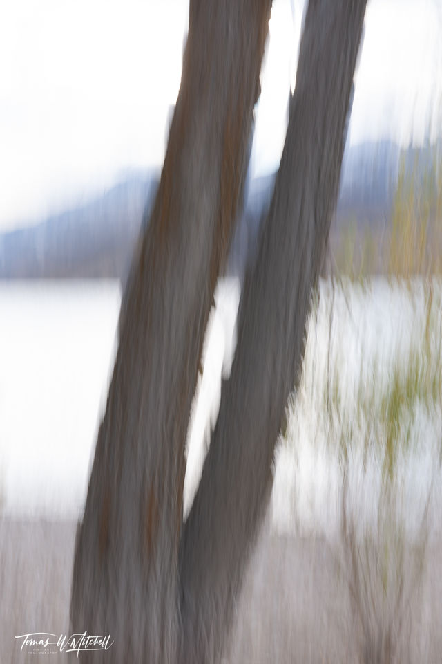 limited edition, fine art, prints, deer creek reservoir, utah, photograph, tree trunks, branches, yellow, brown, layers, shoreline, water, mountains