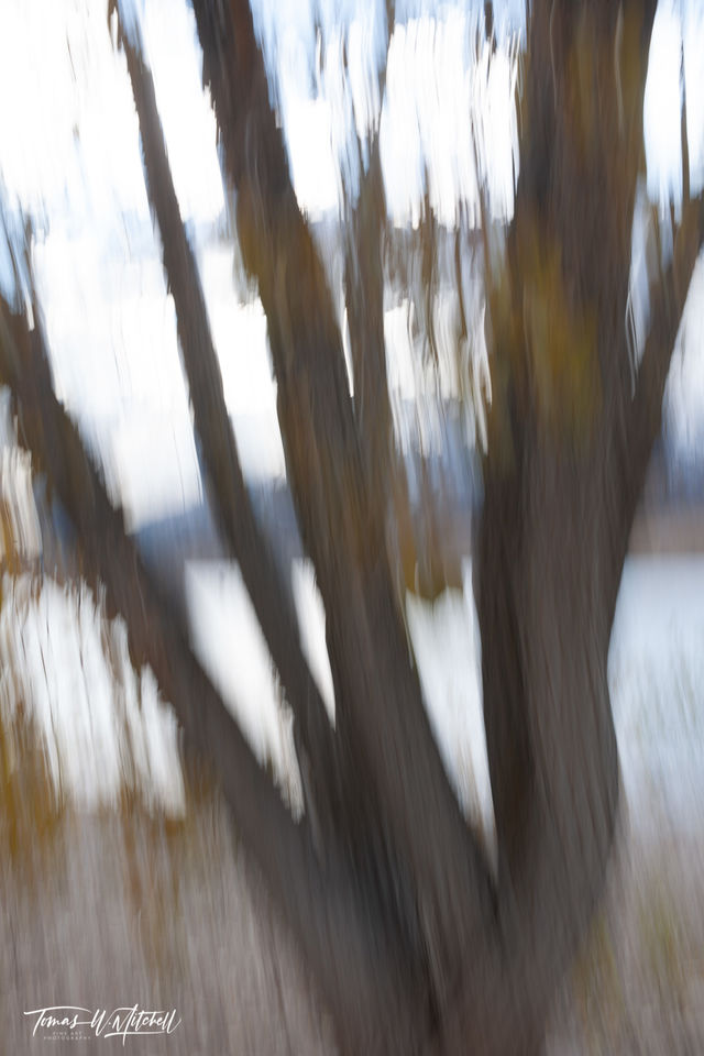 limted edition, fine art, prints, photograph, deer creek reservoir, utah, painted, yellow leaves, branches, shoreline, water, mountains, abstract, trees,