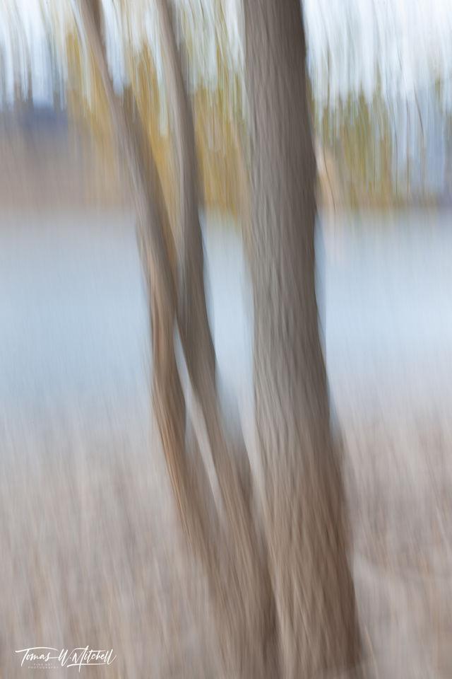 limited edition, fine art, prints, deer creek reservoir, utah, pastels, photograph, grayish, brown, shoreline, blue water, tree trunks, yellowish, green leaves, mountains, trees, abstract