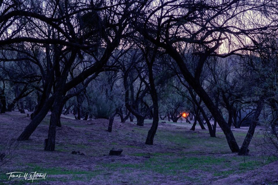 limited edition, fine art, prints, dusk, fire, salt river, arizona, USA, forest, sunset, campfire, photograph, blue hour, grass, trees, sky,