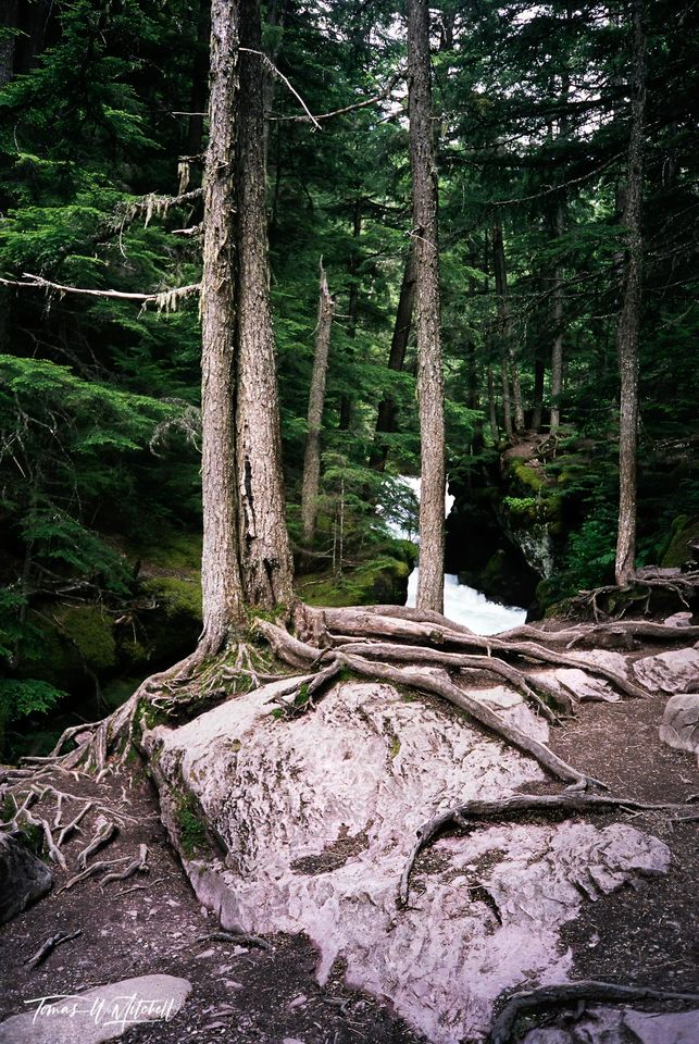 limited edition, fine art, prints, photograph, film, avalanche lake, glacier national park, montana,  j.r.r tolkien, ent, forest, entwood, The Lord of the Rings, roots, rocks, forest, trees, moss