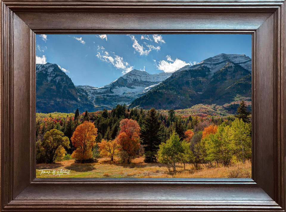 frames, stained, ebony, 20x30, print, photographs, open edition, frame,