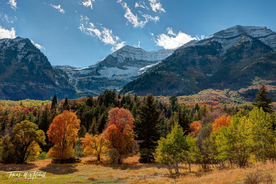 limited edition, fine art, prints, timpanogos, mountain, alpine loop, sundance, snow, maples, blue sky, trees, clouds, red, orange, yellow, color, forest