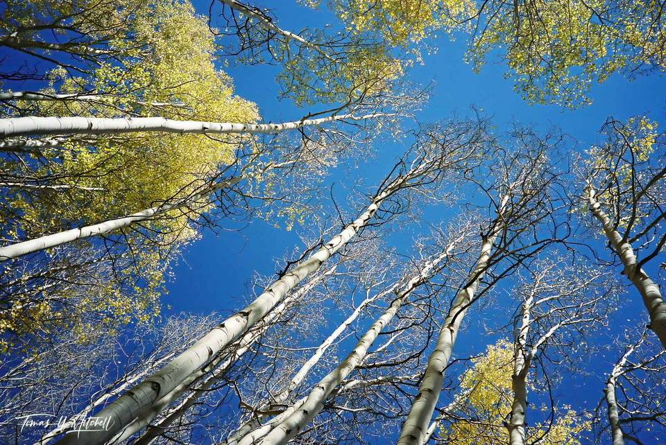 limited edition, fine art, prints, photograph, film, utah, wasatch cache national forest, uinta mountains, autumn, sky, yellow, aspen, trees