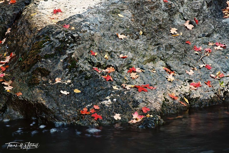 limied edition, fine art, prints, canvas, photograph, film, santaquin canyon, utah, creek, maple trees, colors, falling leaves, dark, rock, water, red, contrast