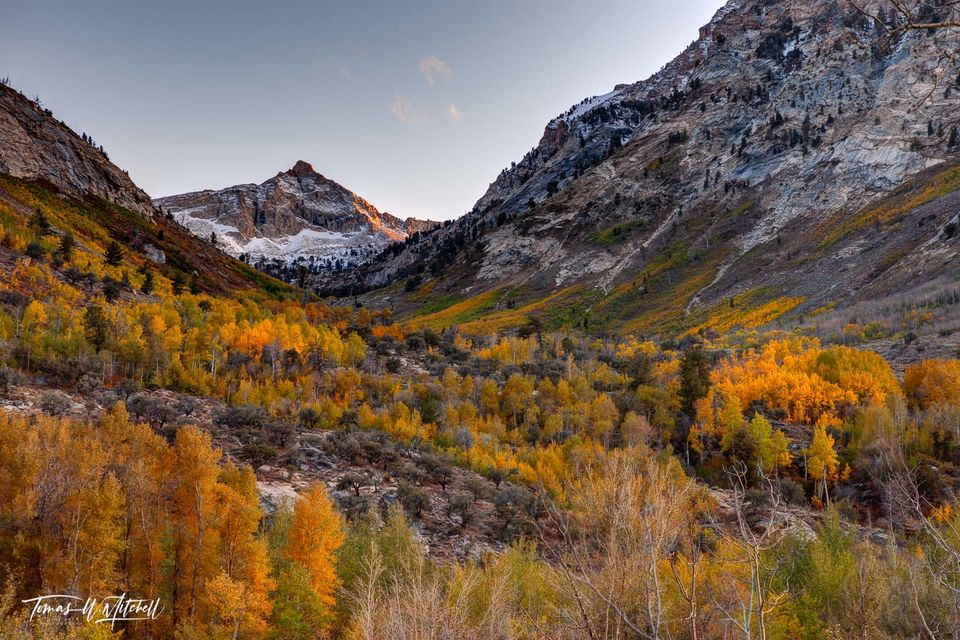 limited edition, fine art, prints, lamoille canyon, nevada, thomas canyon, mount fitzgerald, golden, yellow aspens, mountain, quaking aspens, leaves, evening, pink, photographs, fall