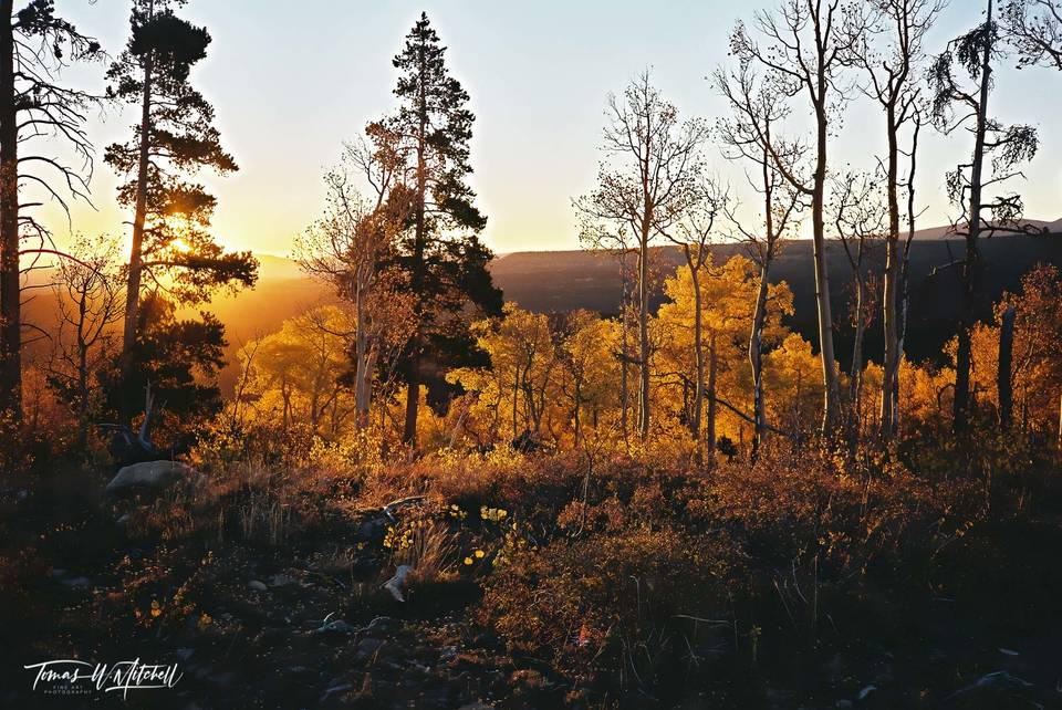 limited edition, fine art, prints, photograph, uinta mountains, utah, red mountain, forest, sunrise, golden, aspen trees, wasatch cache national forest, trees