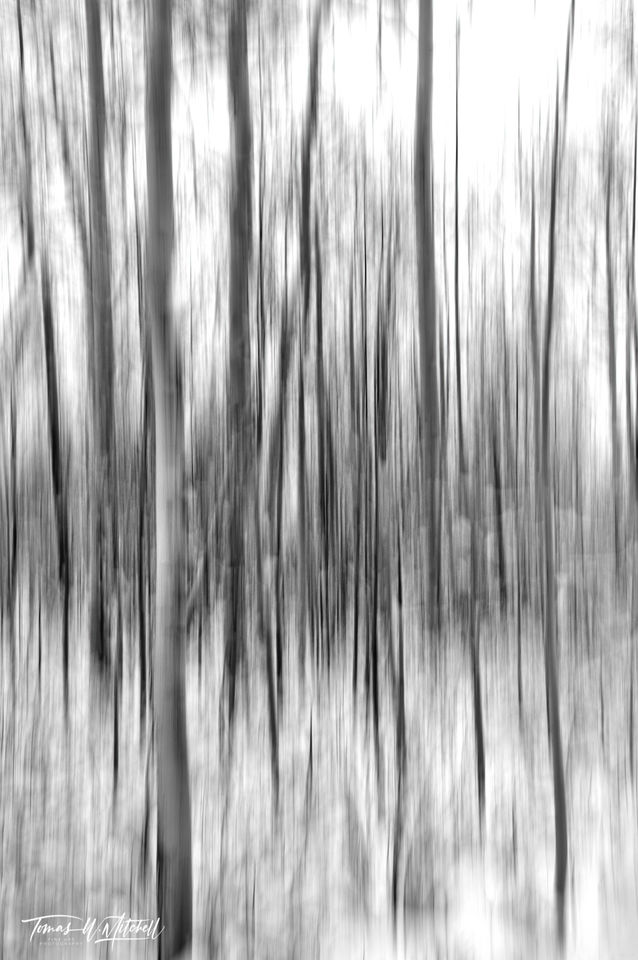 UINTA-WASATCH-CACHE NATIONAL FOREST, UTAH, limited edition, fine art, prints, winter, aspen trees, snow, blur snowflakes, photograph, abstract, black and white