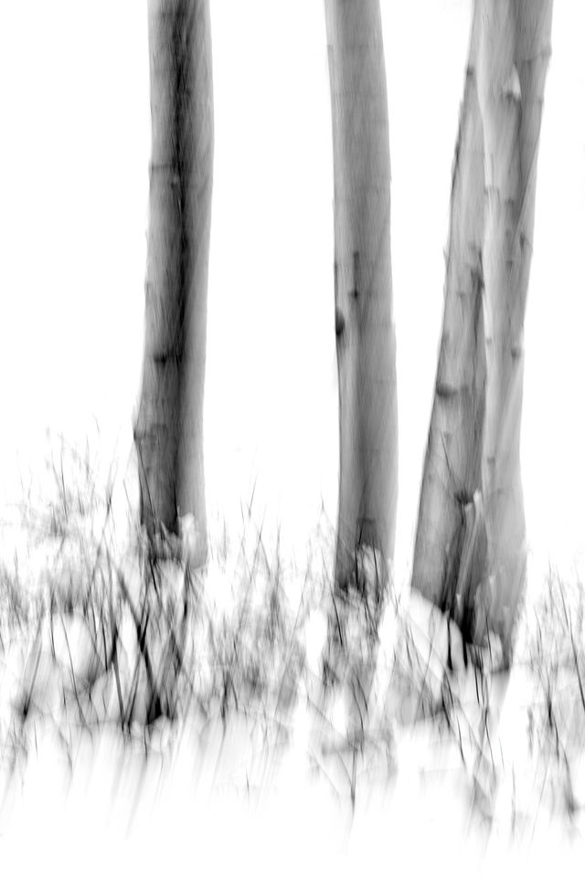 UINTA-WASATCH-CACHE NATIONAL FOREST, UTAH, limited edition, fine art, prints, winter, snow, aspen trees, blur, snowflakes, photograph, abstract, black and white