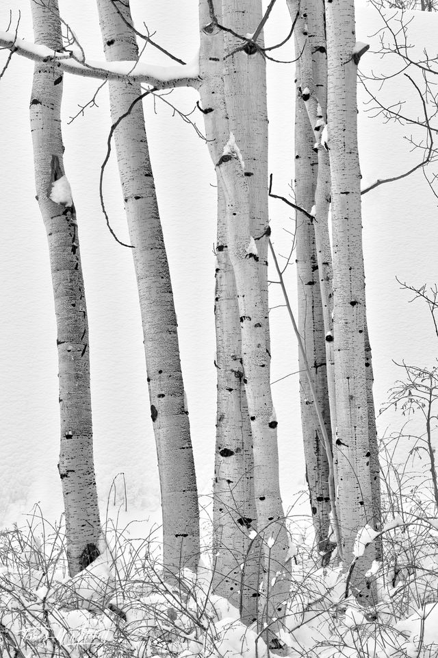 UINTA-WASATCH-CACHE NATIONAL FOREST, UTAH, limited edition, fine art, prints, snow, winter, aspen trees, photograph, abstract, black and white