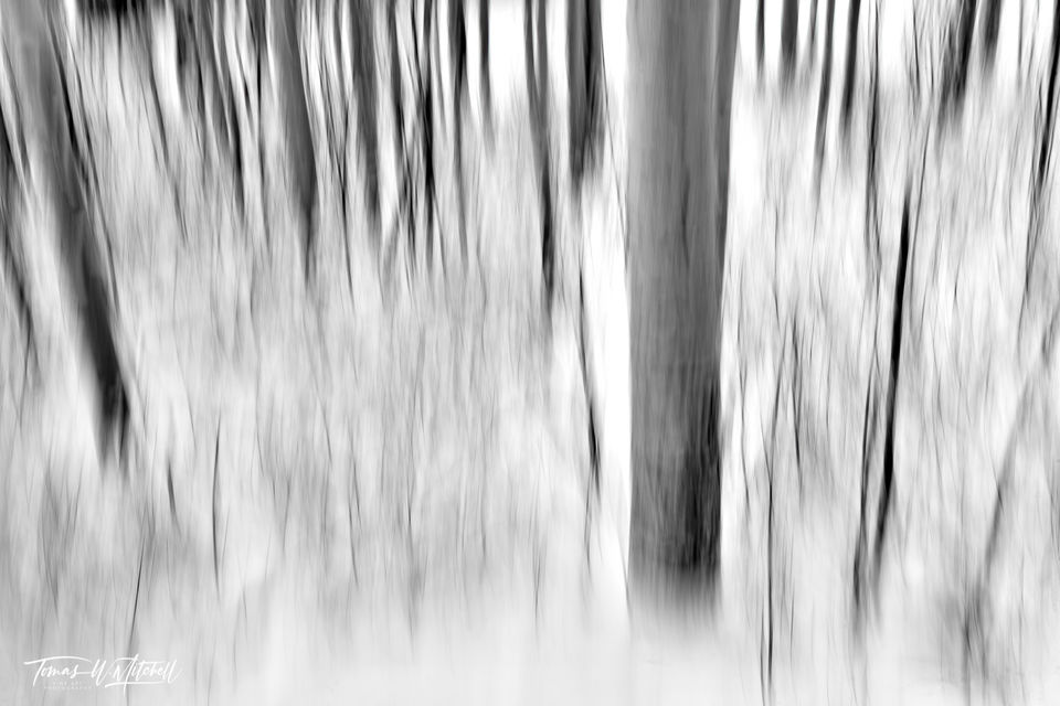 UINTA-WASATCH-CACHE NATIONAL FOREST, UTAH, limited edition, fine art, prints, snowstorm, winter, aspen trees, snowflakes, abstract, photograph, black and white