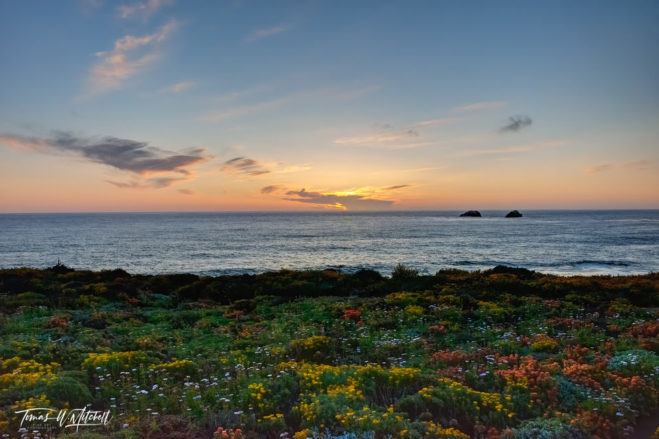 limited edition, fine art, prints, photograph, sunset, soberanes point, garrapata state park, california, coastline, wildflowers, ocean