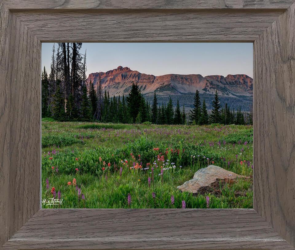 photograph, frame, paper print,