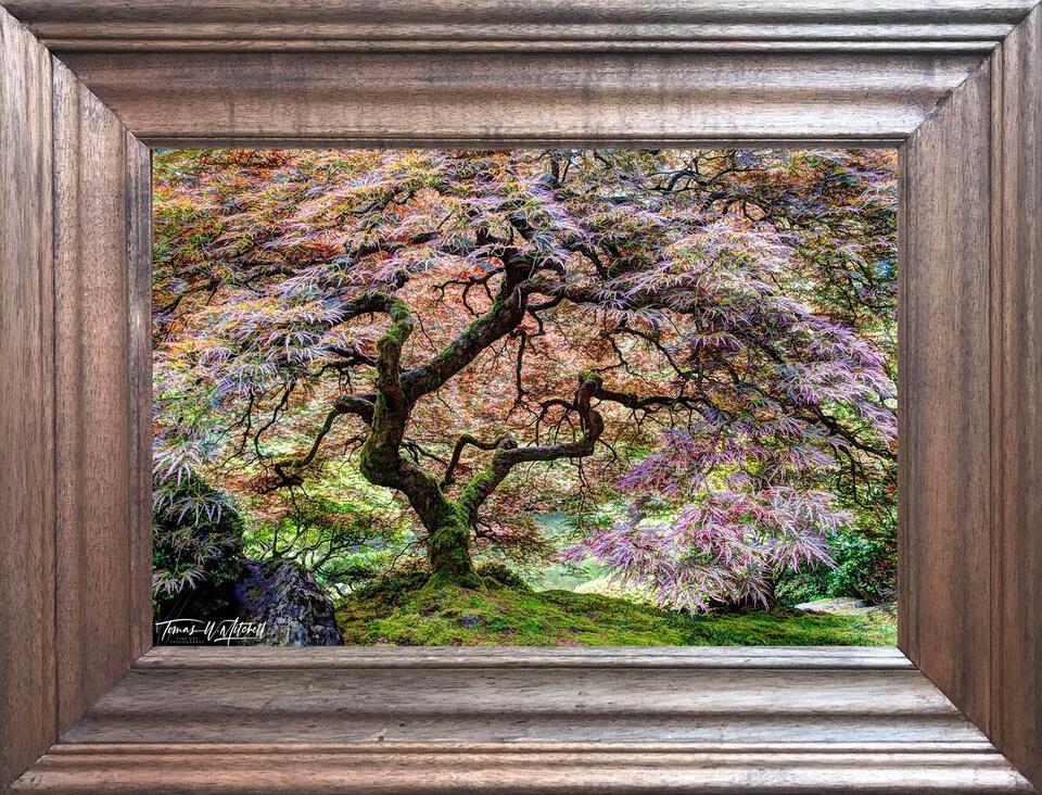 photograph, open edition, print, frame, walnut, 20x30,