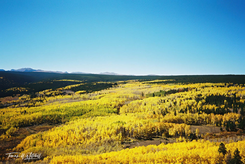 limited edition, fine art, prints, photograph, film, pentax, uinta mountains, wasatch cache national forest, forest, mountains, quaking aspens, lodge pole pine, high uinta's, golden, fall, autumn, uta