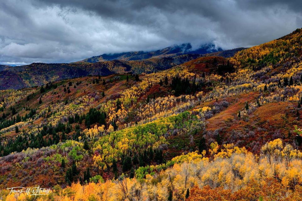 limited edition, fine art, prints, wasatch mountain stake park, utah, autumn, storm clouds, ant knolls, red, yellow, green, forest