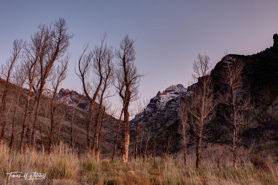 limited edition, fine art, prints, stark trees, sky, lamoille canyon, nevada , humbolt national forest, photographs, towering peak, mount gilbert, cottonwood grove