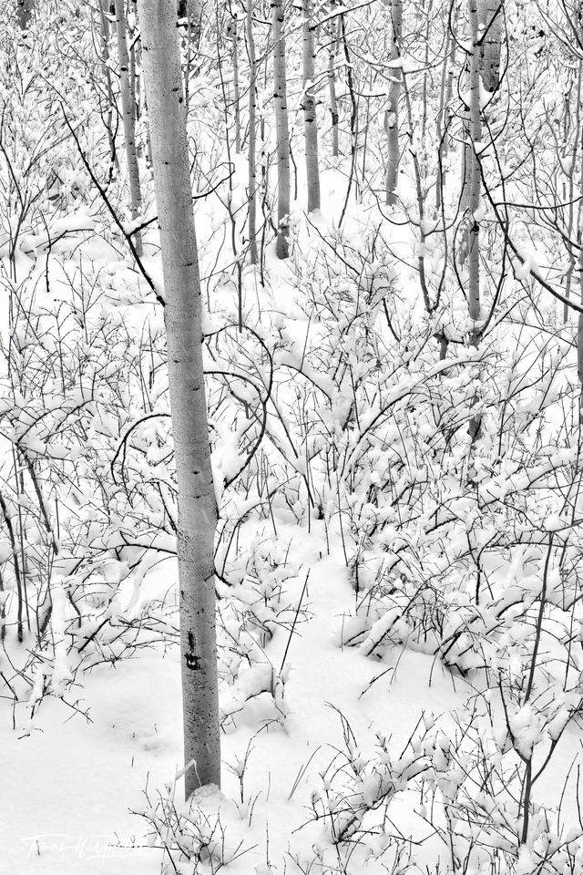 UINTA-WASATCH-CACHE NATIONAL FOREST, UTAH, limited edition, fine art, prints, winter, snow, trees