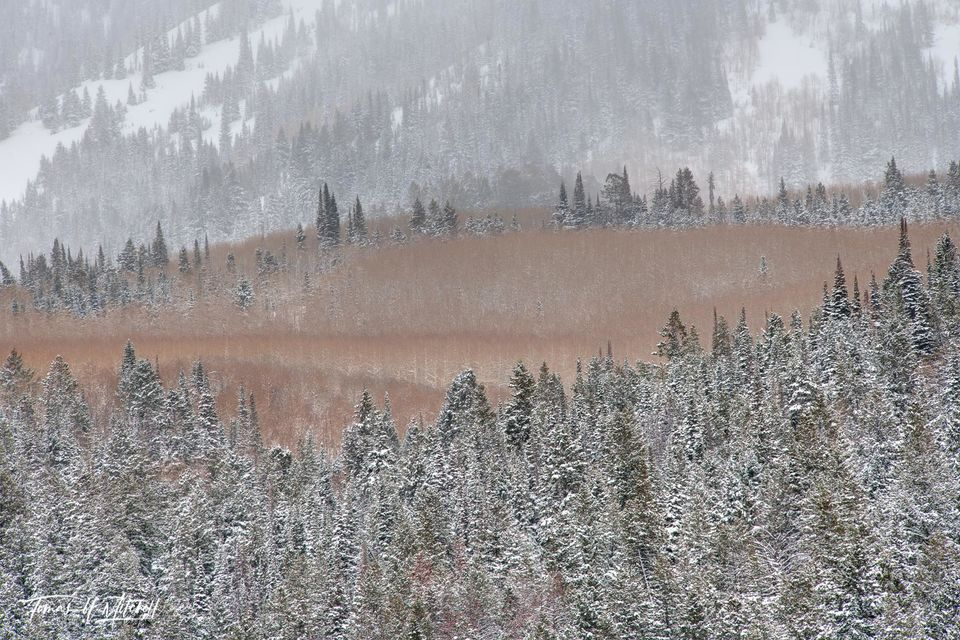 UINTA-WASATCH-CACHE NATIONAL FOREST, UTAH, limited edition, fine art, prints, mountains, winter, storm, nature, forests, snow, trees, white, mountainside, aspen, fir, photograph