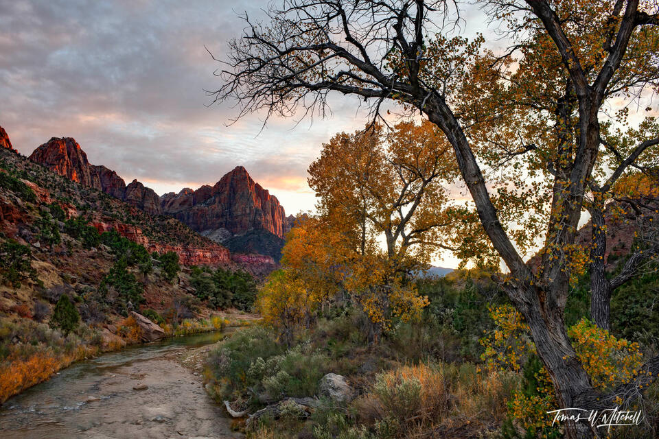 limited edition, fine art prints, zion national park, utah, watchman, kolob canyons, red rock, photograph, sunset, autumn, cottonwood trees, virgin river