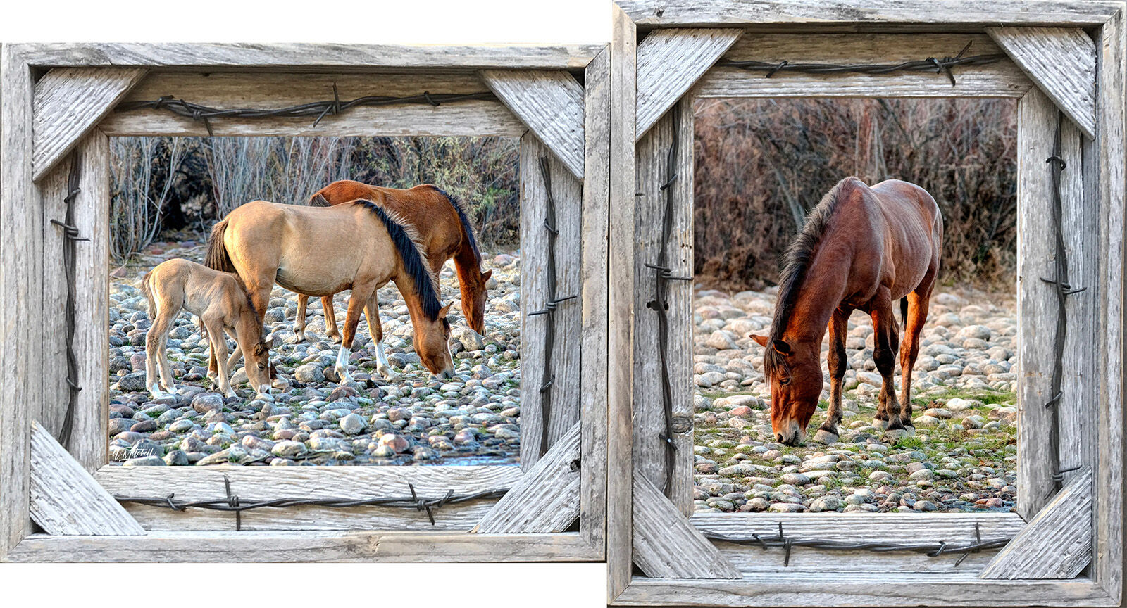collectors choice, 8x10, photographs, framed, barnwood, frame, barbwire, paper prints, , photo