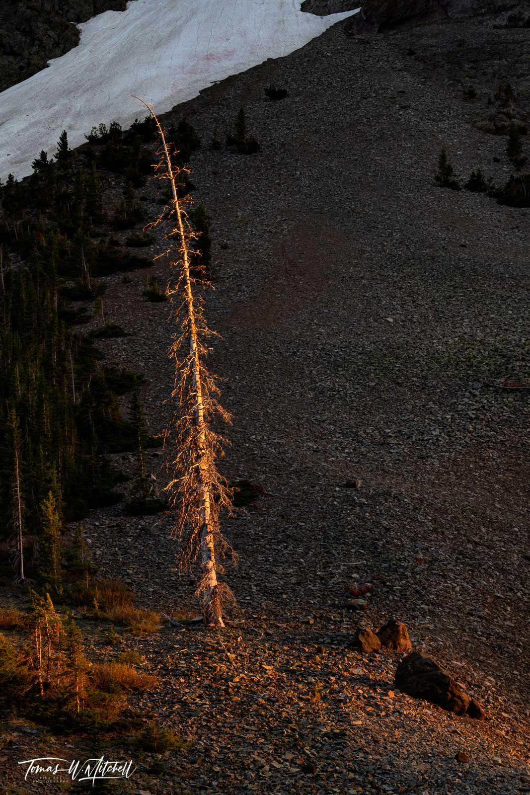 yellowstone national park, wyoming, limited edition, fine art prints, sylvan pass, trees, alpine light, tree, rocks, photo