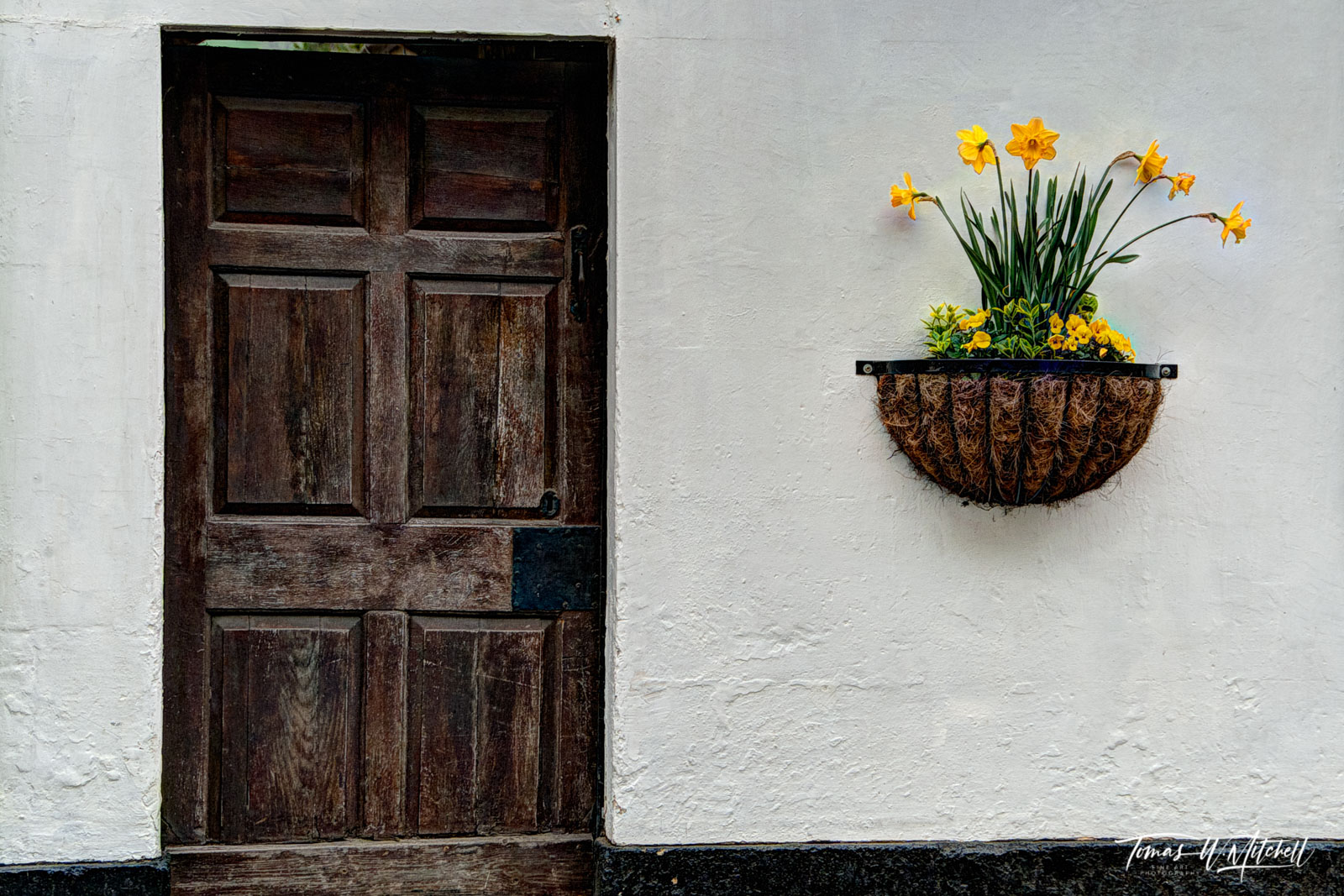 limited edition, museum grade, fine art, prints, photographing, flowers, doors, still lifes, door, image, daffodils, England, Cotswolds, photo