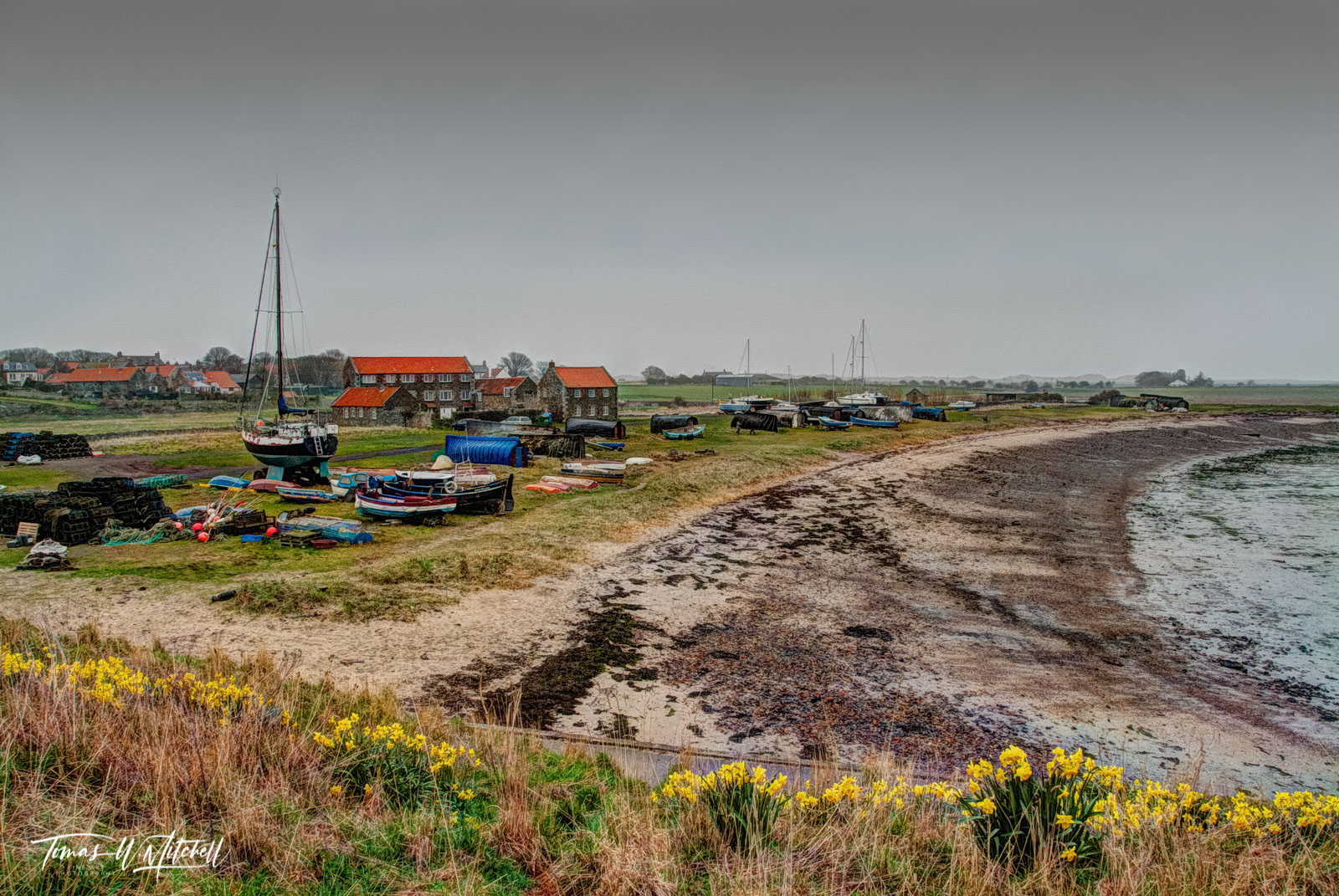 limited edition, museum grade, fine art, prints, fishing village, lindisfarne, england, holy island, history, viking, britain, monastery, photograph, beach, boats, buildings, daffodils, yellow, englis, photo