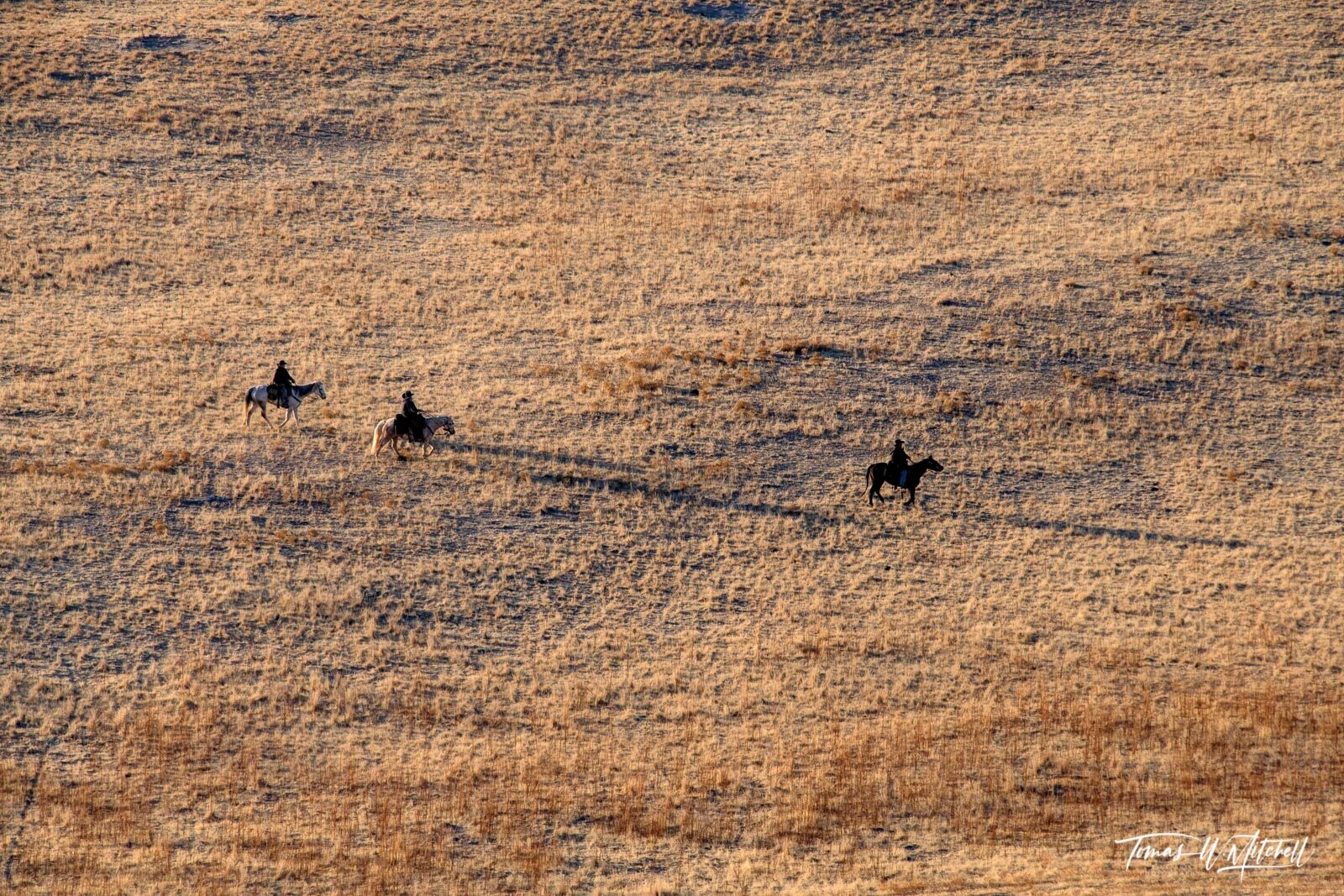 limited edition, fine art prints, antelope island state park, utah, white rock loop trail, home on the range, photograph, evening light, shadows, horse riders, photo