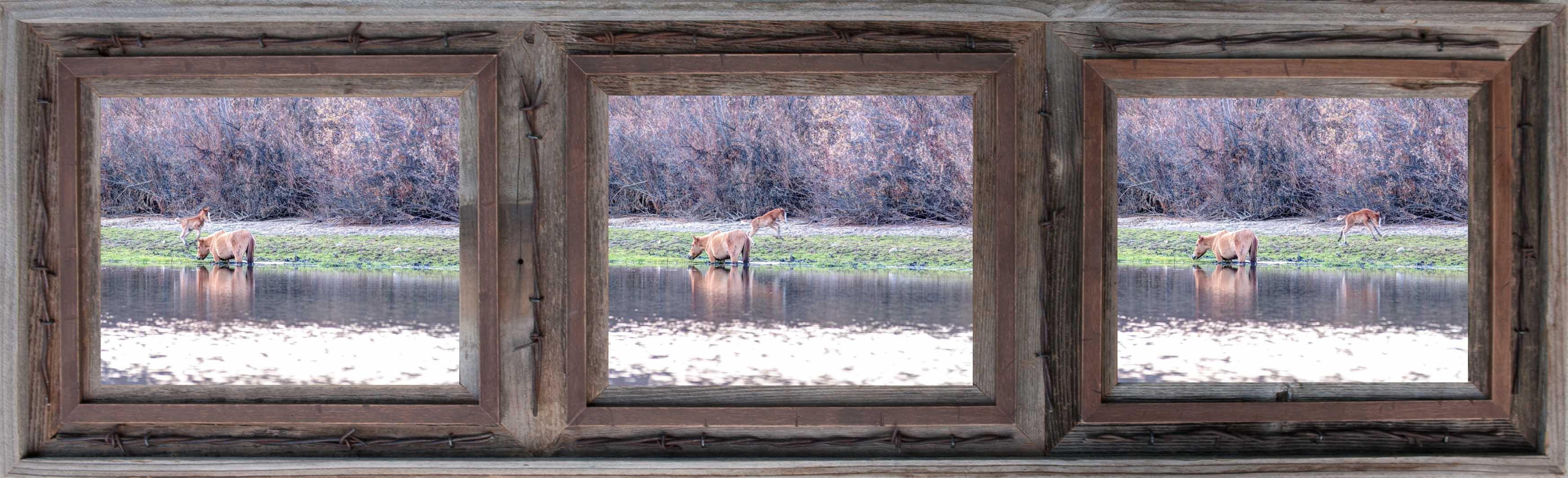 limited edition, fine art, prints, salt river, arizona, mustangs, river, mare, colt, horses, photograph, photo