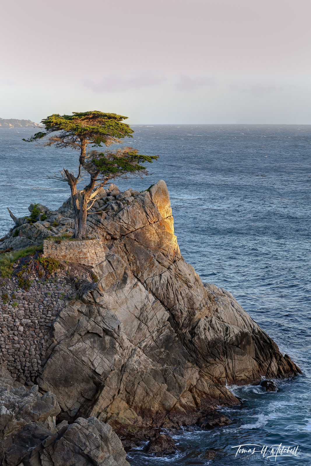 Limited Edition of 25 Museum Grade, Fine Art Prints. The Lone Cypress tree in Pebble Beach is one of the popular attractions...
