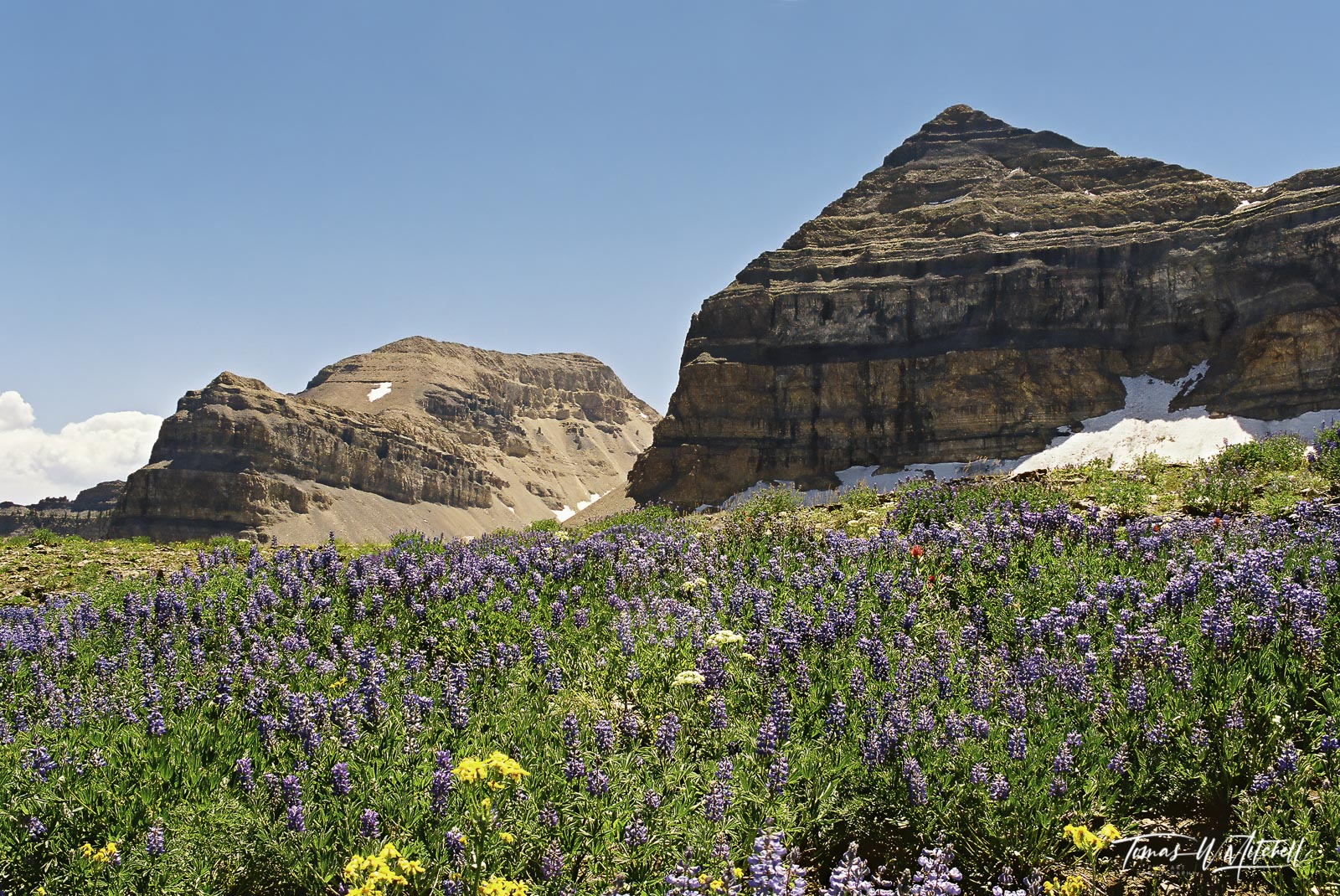 open edition, canvas prints, mount timpanogos, hiking,  wildflowers, lupine, paintbrush, columbine, utah, photo