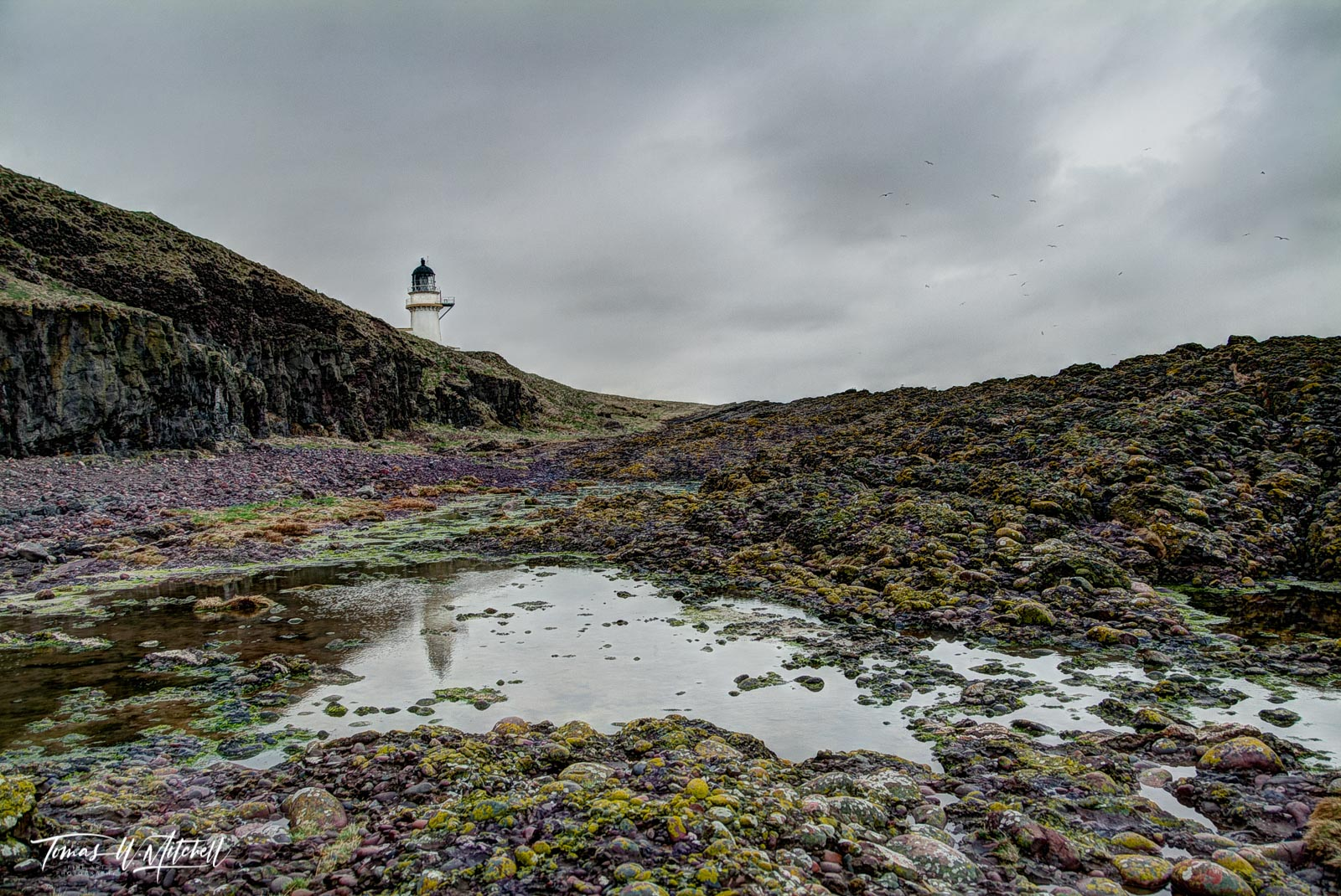 limited edition, museum grade, fine art, prints, todhead lighthouse, lighthouse, marykirk, scotland, a92, stormy, coastline, moss, rocks, yellows, greens, reflection, water, gulls, mood, photo