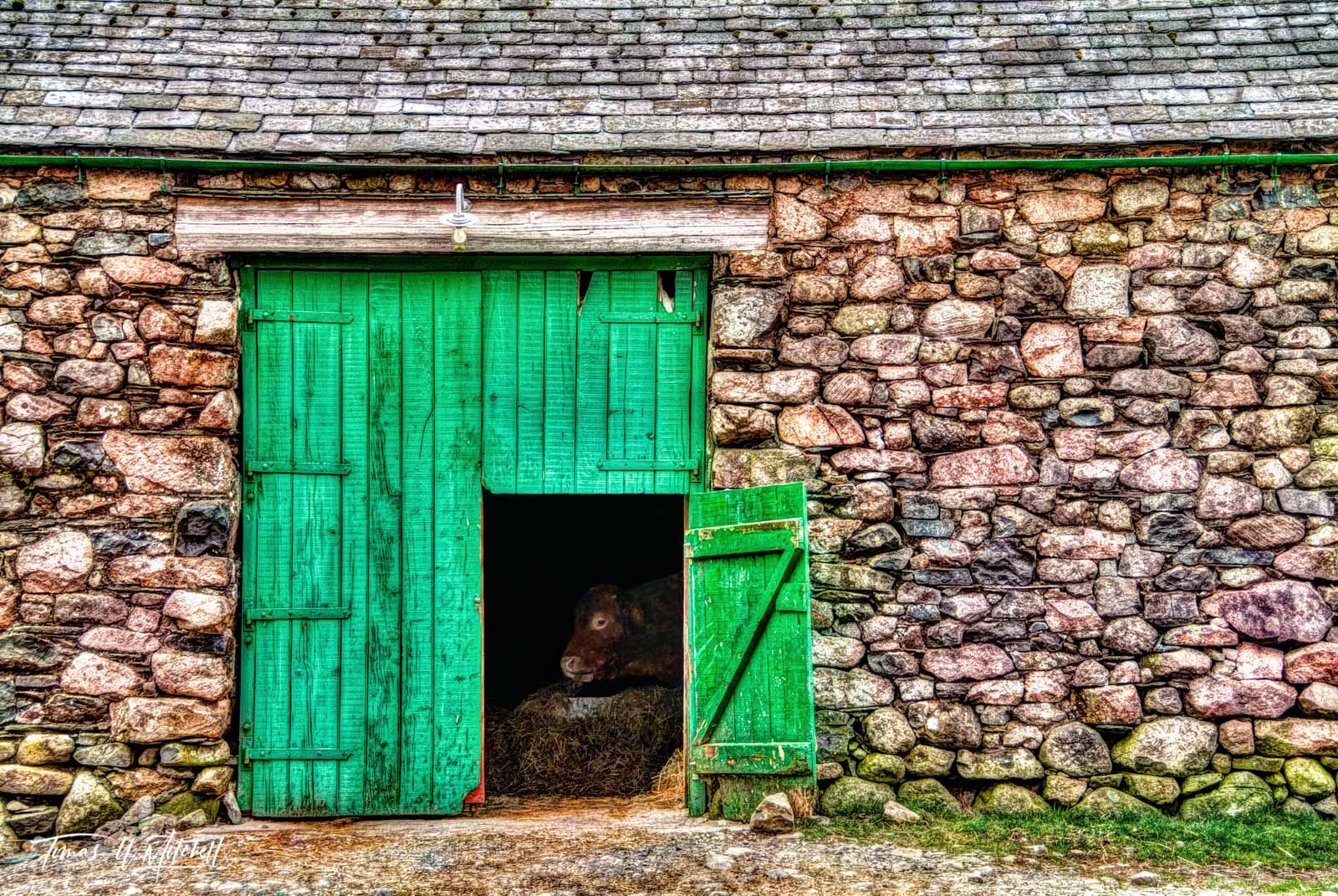 limited edition, museum quality, limited edition, prints, photograph, cow, wasdale head, england, lake district, photobombed, barn, door, scafell pike, photo