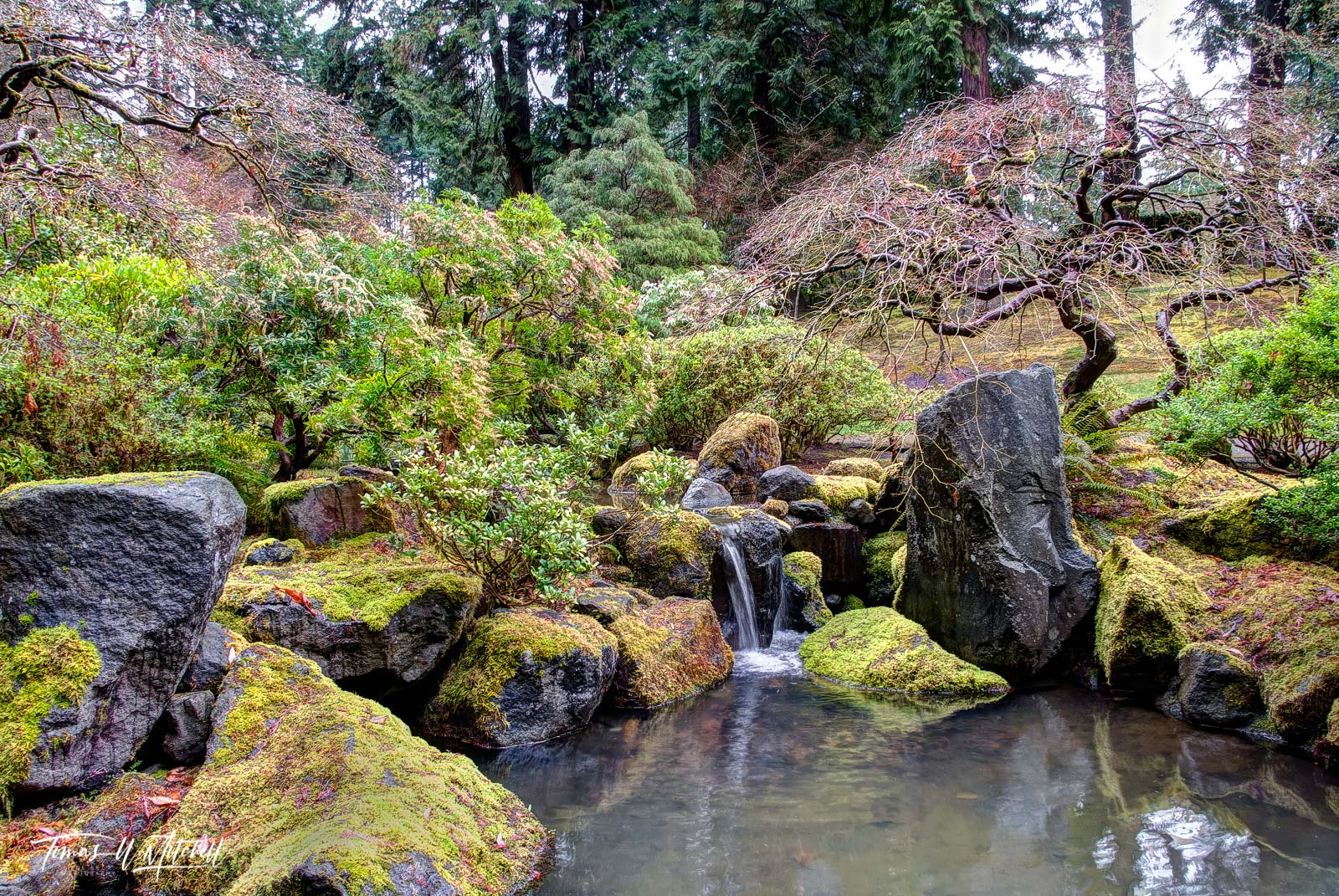 limited edition, fine art, prints, japanese garden, portland oregon, serenity, spring, tree, moss, green, rocks, photograph, pond, water fall, photo