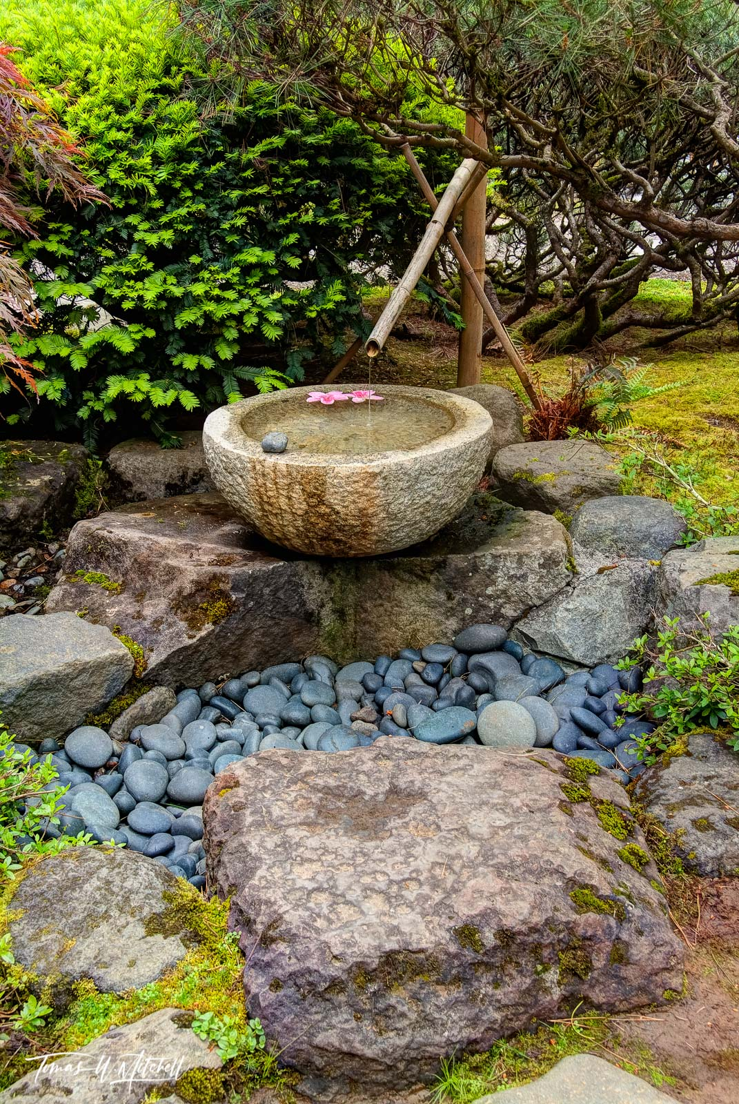 Limited Edition of 50 Museum Grade, Fine Art Prints. The Japanese Garden at Portland Oregon is a magical place full of serenity...