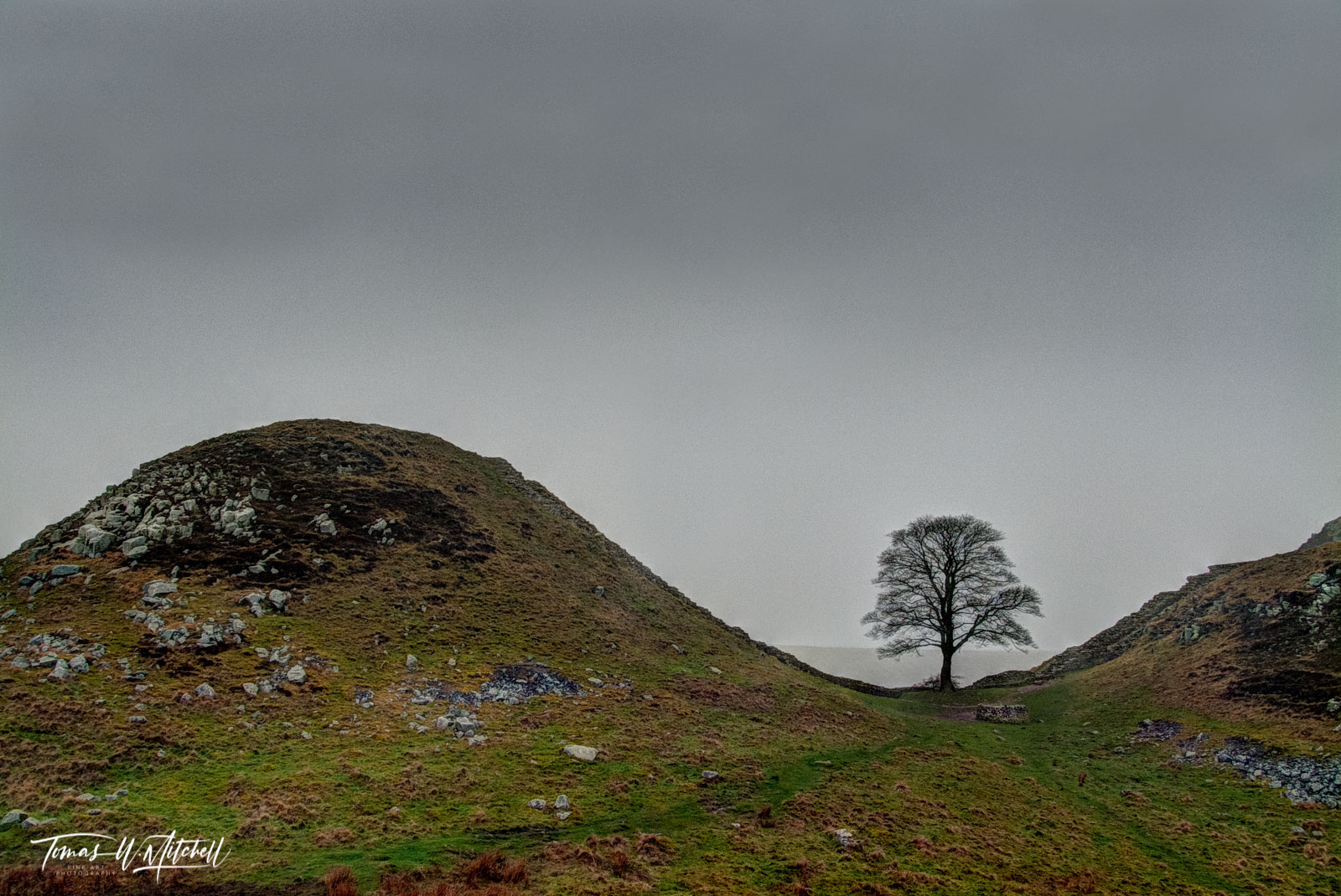 limited edition, museum grade, prints, photographing, sycamore gap, famous, Hadrian's wall, England, Robin Hood, Prince of Thieves, Kevin Costner, tree, hiking, trail, hills, wall, photo