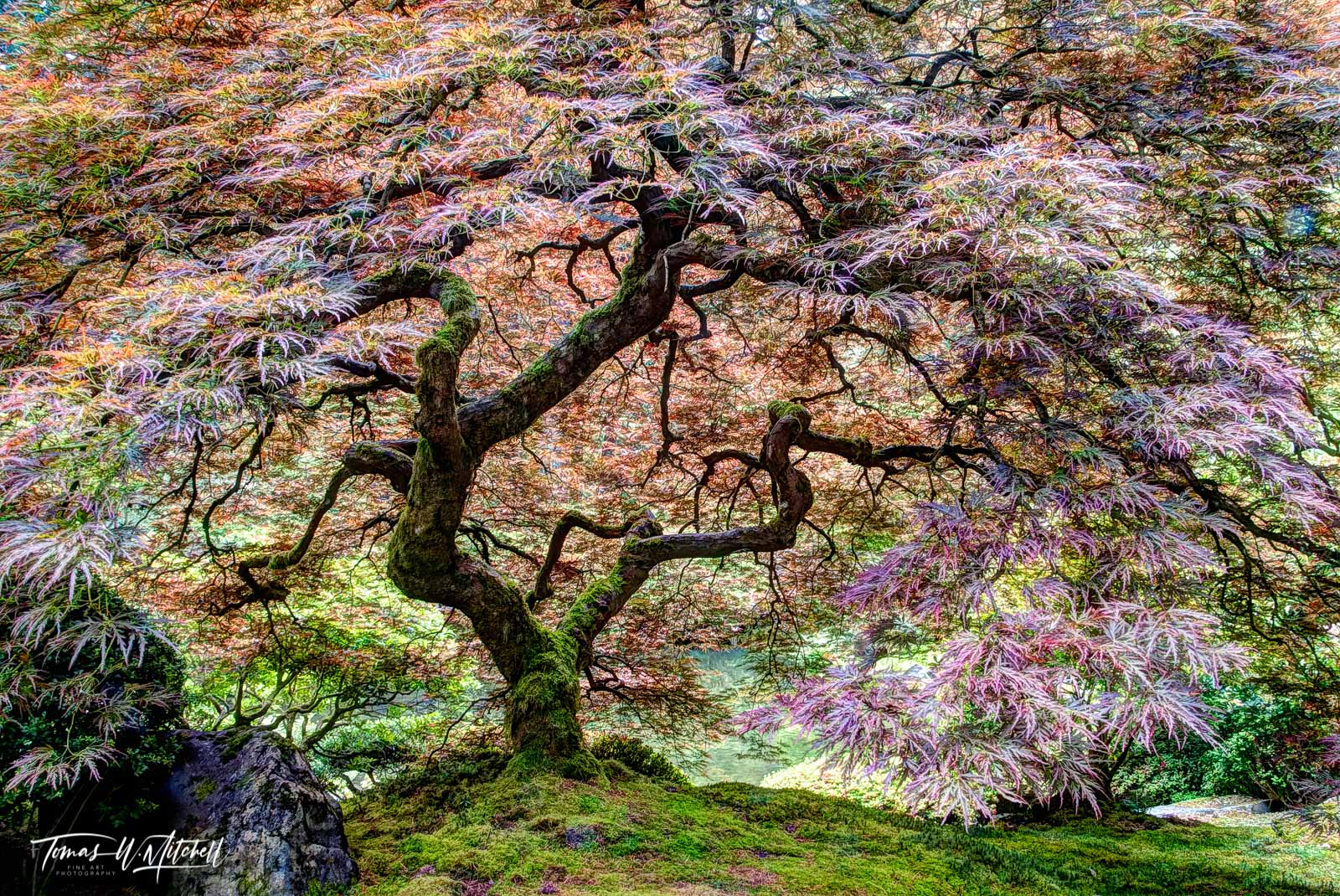 limited edition, fine art, prints, tree of life, portland oregon, japanese garden, photograph, rodney lough jr, peter lik, spring, colors, green, yellow, red, photo