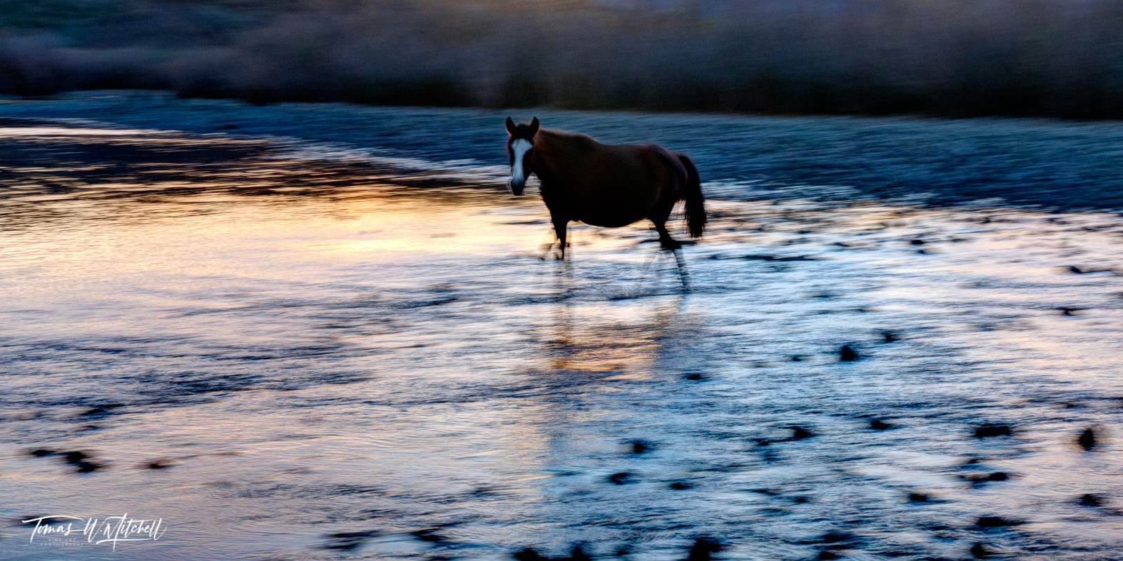 limited edition, fine art, prints, photograph, salt river, arizona, wild horses, abstract, blurred, sunset, horse, water, strider, photo