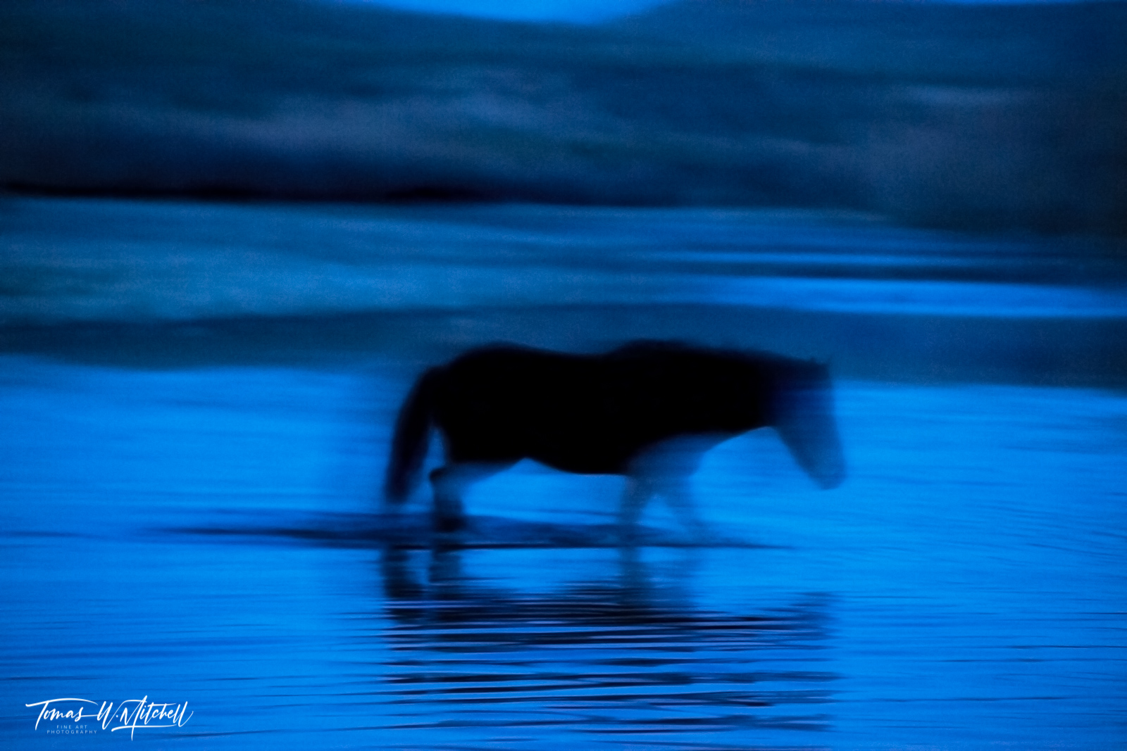 limited edition, fine art, prints, salt river, arizona, photograph, wild horses, abstract, blue, ghost, horse, fantasma azul, , photo